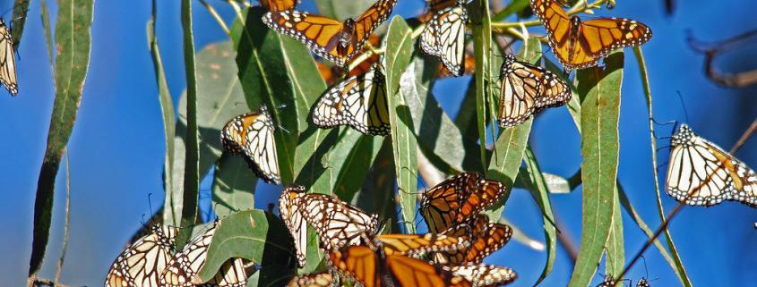 Rosalynn Carter Butterfly Trail