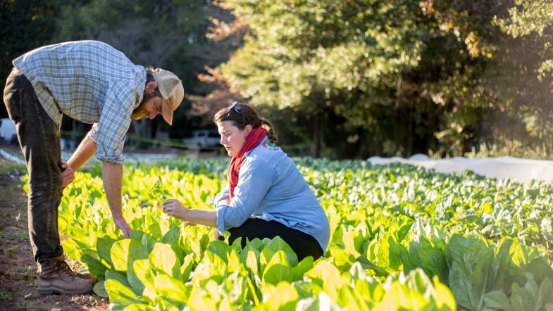 Judith Winfrey and Joe Reynolds examine a new crop of lettuce in the evening sun.