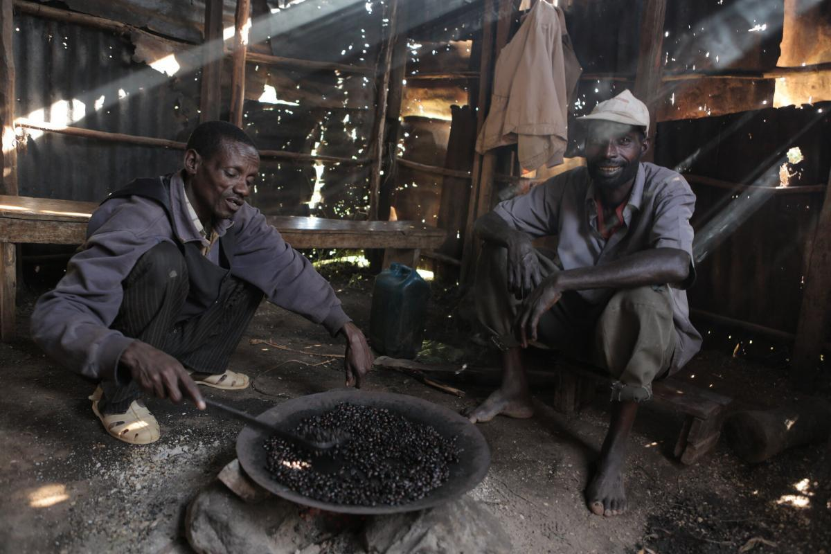 Top 3 Reasons Ethiopian Coffees Are Unique From Any Other Origin 1