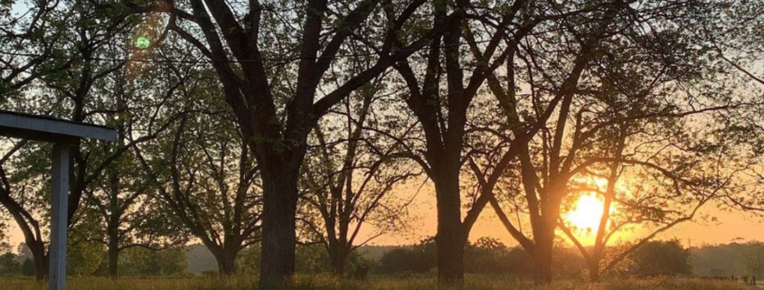 Koinonia Farm: Embracing and Creating Community In Southwest Georgia 1